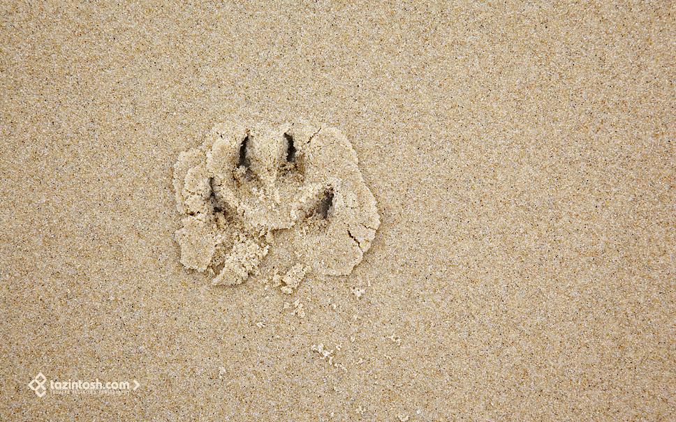 Wallpaper Dog Footprint